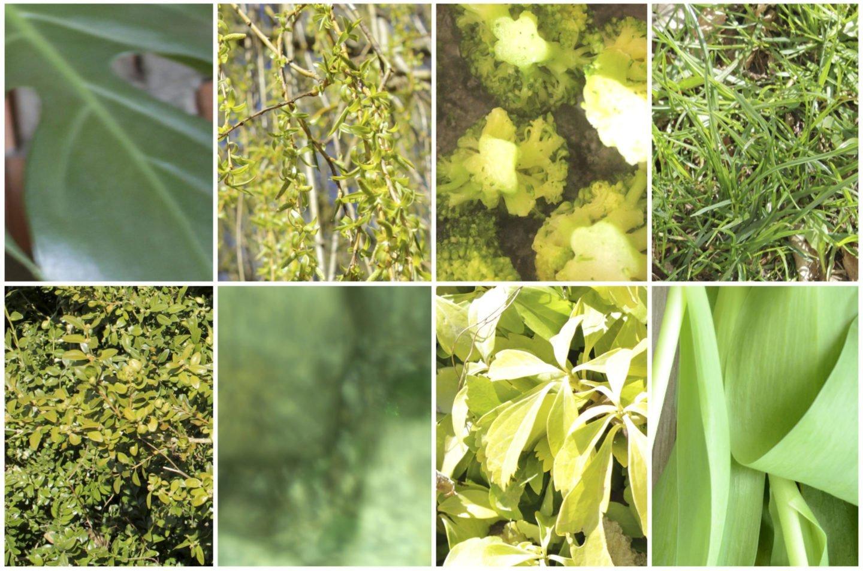 Grün ist in: Greenery ist der Farbtrend von Pantone für 2017